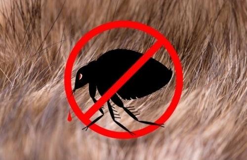 Mosquito Free Club Flea Control