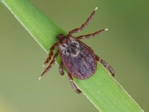 tick control services from Mosquito Free Club